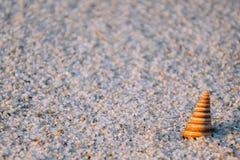 Seeshell auf sonnigem Strand Lizenzfreies Stockfoto