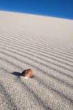 Seeshell auf Wind durchgebrannten Sandzeilen Lizenzfreie Stockfotografie