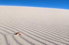 Seeshell auf Wind durchgebrannten Sandzeilen Stockfotos