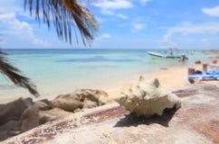 Seeshell in einem tropischen Paradies Lizenzfreie Stockfotografie