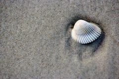 Seeshell im Sand stockbild