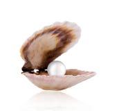 Seeshell mit Perle Stockbild