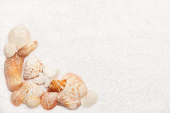 Seeshell-Rand auf weißem flaumigem Tuch stockfotografie