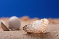 Seeshell Seashell auf Strandsand und blauem Himmel stockfotografie