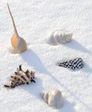 Seeshells auf dem Schnee Stockfotos