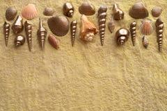 Seeshells auf goldenem Sand Lizenzfreies Stockfoto