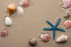 Seeshells auf Sand Stockfoto