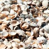 Seeshells auf Sand Stockfotos