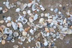 Seeshells auf Sand Volleyballkugel auf leerem schönem Strand Lizenzfreie Stockfotos