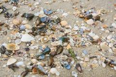 Seeshells auf Sand Volleyballkugel auf leerem schönem Strand lizenzfreies stockfoto