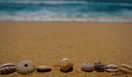 Seeshells auf Sand Volleyballkugel auf leerem schönem Strand Sommerzeitkonzept, Kopienraum lizenzfreies stockfoto