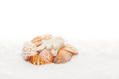 Seeshells auf weißem Tuch-Exemplar-Platz lizenzfreie stockfotos