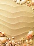 Seeshells mit Sand Stockfotos