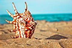 Seeshells mit Sand und Meer als Hintergrund Stockfotos