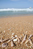 Seeshells am Strand mit Exemplarplatz Stockfotografie