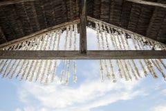 Seeshells und der Himmel Stockfotografie