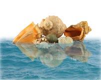 Seeshells und -steine im Wasser Lizenzfreie Stockfotos