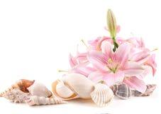 Seeshells und tropische Blumen Lizenzfreies Stockbild