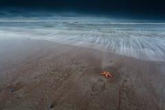 Seestern auf Sandstrand lizenzfreies stockbild