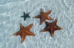 Seestern an der Sandunterseite des feinen Meeres Lizenzfreie Stockfotografie