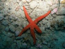Seestern von Mittelmeer Stockfotos