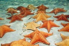 Seesterne auf sandigem Meeresgrund Lizenzfreie Stockfotos