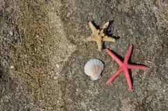 Seesterne auf Strand-Sand Stockfotos