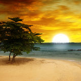 Seestrand, ein Baum und Sonnenuntergang Stockfoto