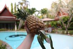 Seet ananas i varma Thailand fotografering för bildbyråer