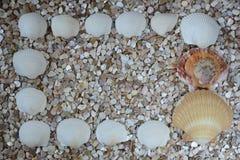 Seethemenorientierter Hintergrund mit dekorativer Shell Design Stockbild