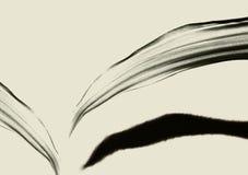 Seethrough Bladeren met schaduw op een lichtbruine achtergrond stock afbeeldingen