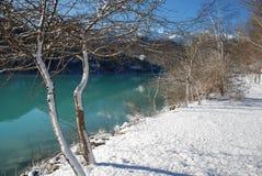 Seeufer-Bäume im Schnee, Friuli Stockfotos