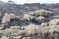 Seeufer entlang China-Felsen, 17 Meilen-Antrieb, Kalifornien, USA Lizenzfreie Stockbilder