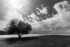 Seeufer mit einem Baum und ein tiefer Himmel mit Wolken Lizenzfreie Stockbilder