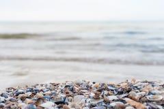 Seeuferhintergrund Lizenzfreie Stockfotografie