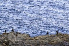 Seevögel auf den Felsen Stockfotos
