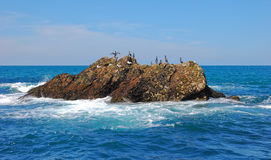 Seevögel auf einem Felsen stockfotos