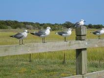 Seevögel auf einem Zaun Stockbild