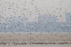 Seevögel bei Mai Po Nature Reserve Lizenzfreie Stockfotografie