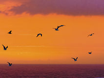Seevögel fliegen hinter einen großartigen Sonnenuntergang an der Sturm-Flussmündung im Tsitsikamma-Naturreservat in Südafrika stockbild