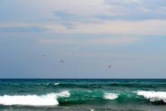 Seevögel im Flug über Meereswogen Stockfoto