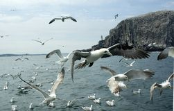 Seevögel im Flug lizenzfreies stockfoto