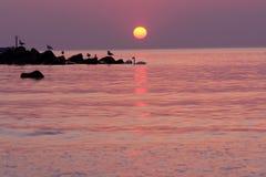 Seevögel silhouettiert auf Wasser Lizenzfreies Stockbild