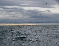 Seevögel und ein stürmischer Schacht Lizenzfreies Stockbild