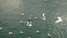 Seevögel, die in das Meer schwimmen stock footage