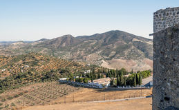 Seeview of olive. Olive grove located in the Sierra de Cadiz in Spain, in the background are the mountains, you can see some trees in the mountain and a seeview royalty free stock photography