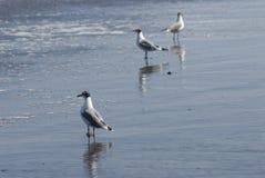 Seevogel Stockfotografie