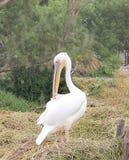 Seevogel lizenzfreie stockbilder
