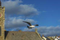 Seevogel, der über Fischereihafen Porthlevan fliegt Stockfotos