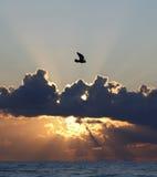 Seevogelflugwesen am Sonnenuntergang Lizenzfreies Stockbild